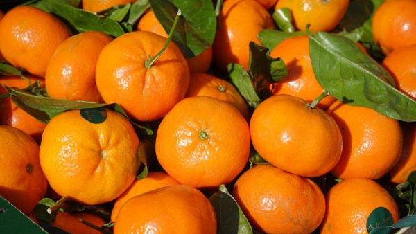 Made in Italy, clementine sostenibili