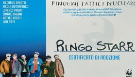 pinguini tattici