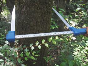 Forest relief using dendrometric stand